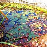 the Pond in Wasserfallen - BL - Switzerland