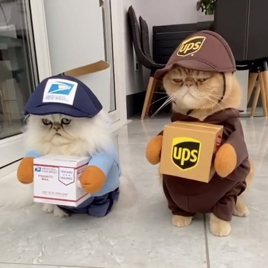 Cats Dressed Up in Mail Carrier Costumes For Halloween