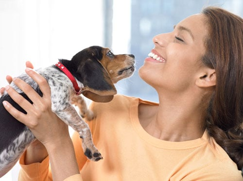 Playing With Pets Reduces Stress