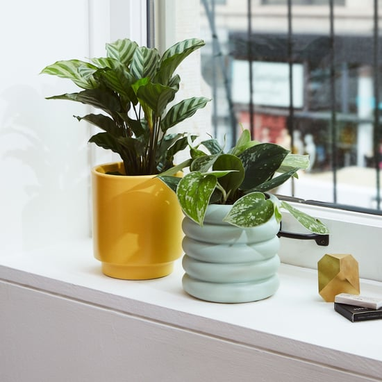 Best Indoor Plants For Dorms
