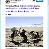 Star Wars web show host Bonnie Burton found some oceanside role-playing corgis (the new cat of the Internet?).