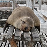 This seal, who called dibs on this bench.