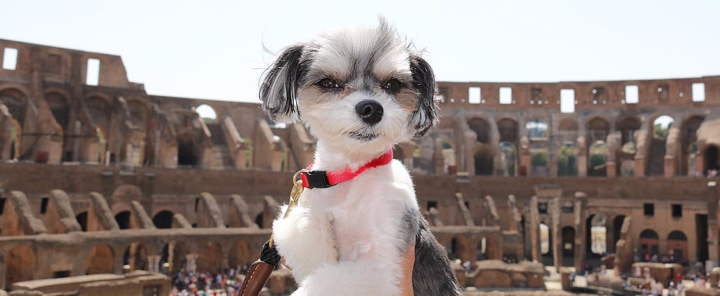 Tinkerbelle the Dog's Roman Holiday Looks Ridiculously Fun