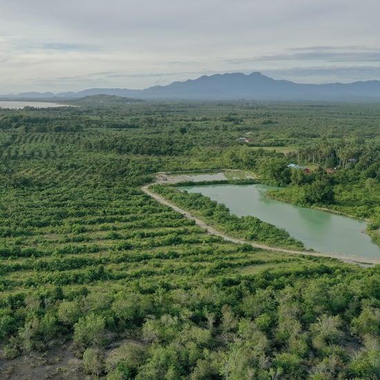 Dove Announces Forest Restoration Project For Climate Change