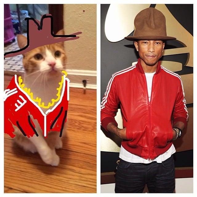 #SnapCat Is the Best Thing on the Internet Right Now