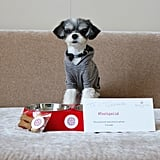 Checking in to the pet-friendly luxury hotel NH Collection Roma Palazzo Cinquecento made my arrival extra special! I was provided with these classic custom NH Collection dog bowls and homemade Italian dog treats! There is also a complementary bottled water left in the room every day, so I would never go thirsty!