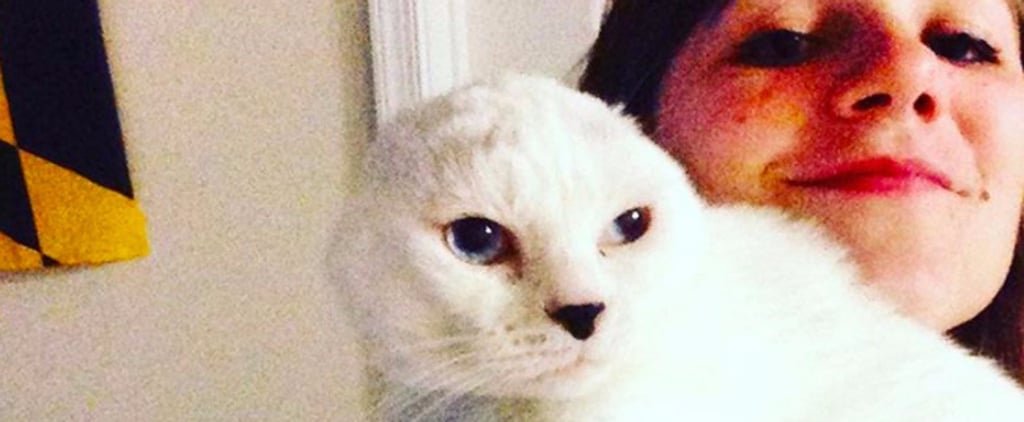 Kind Stranger Gives Earless Old Cat a Chance When No One Else Would