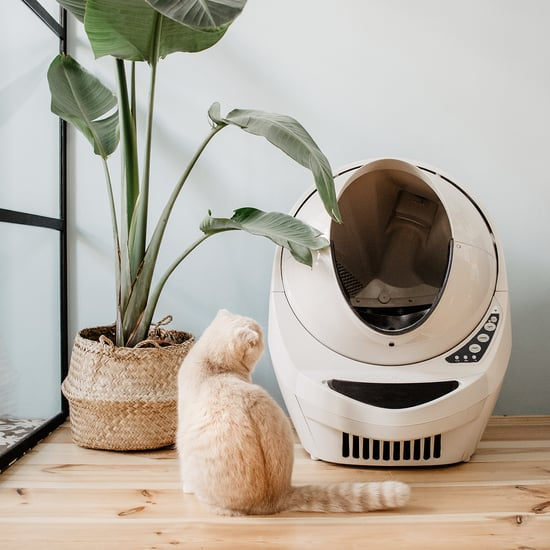 Litter-Robot 3 Connect Review
