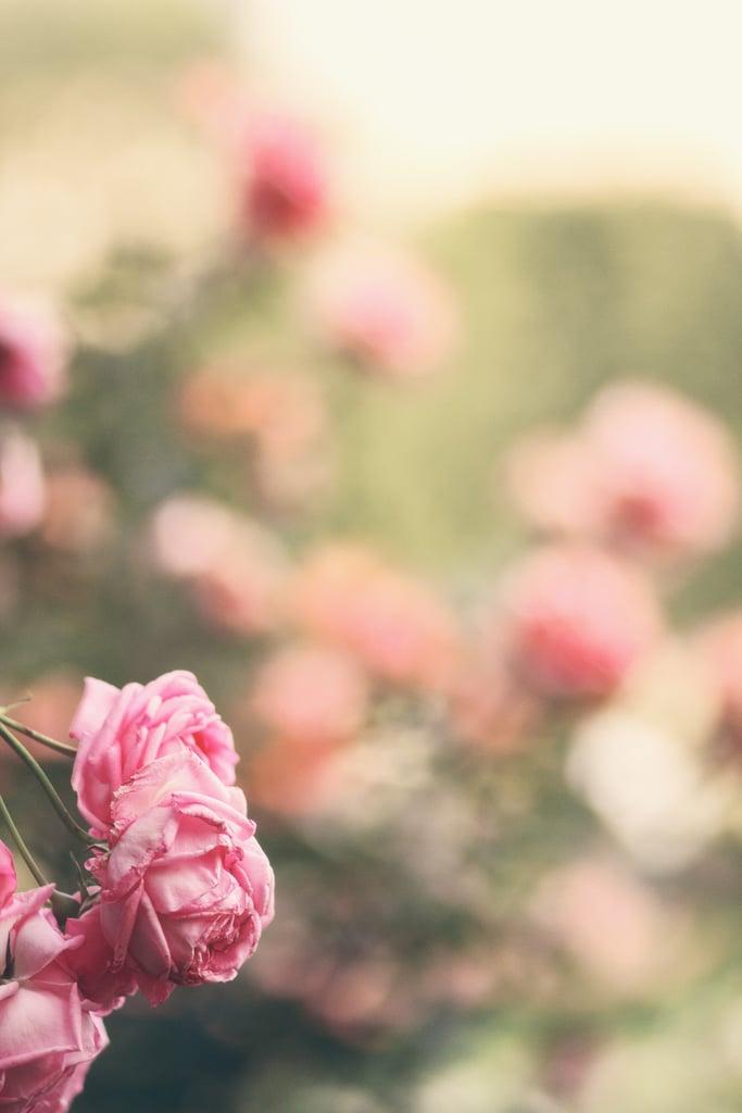 Flowerfield iPhone Wallpaper