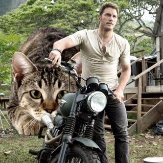 Jurassic World With Cats