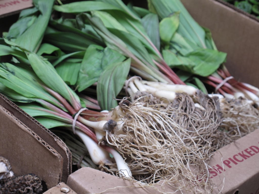 The Spring Food: Ramps