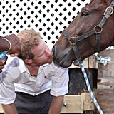 Prince Harry With Animals Pictures