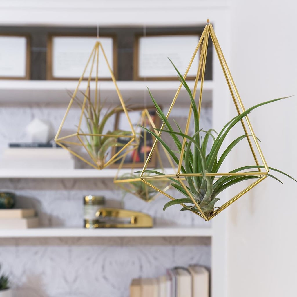 How to Decorate With Air Plants and Succulents