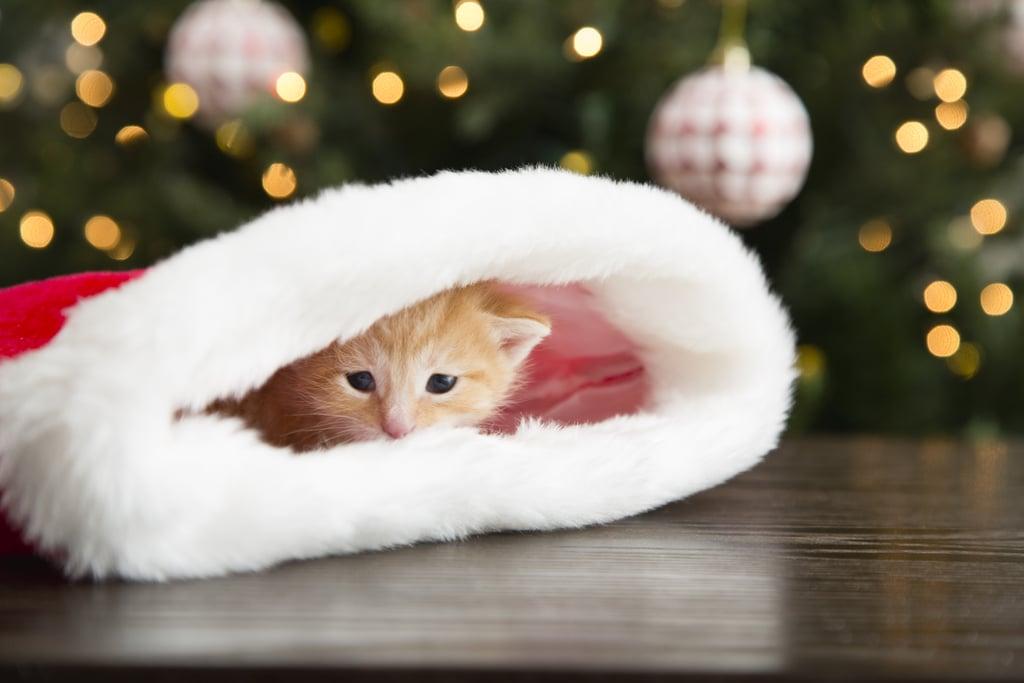 30 Stocking Stuffers Your Cat Will Love