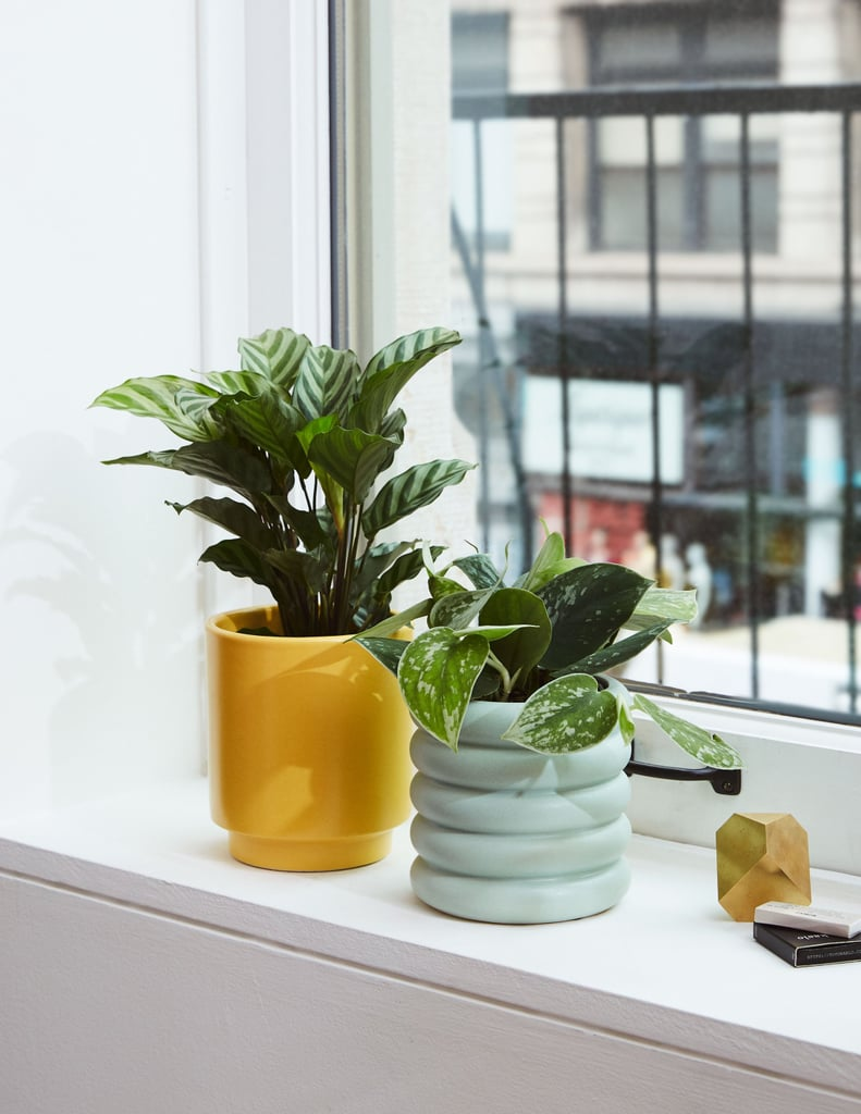 Decorate Your Dorm in Plants Galore! 51 Greens That Can Handle Tough Love and Tiny Spaces