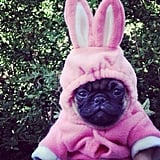 On Easter Sunday, Carly Rae Jepsen dressed up her dog in a festive costume.  Source: Twitter user carlyraejepsen