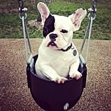 Source: Instagram User rucca_the_silly_frenchie