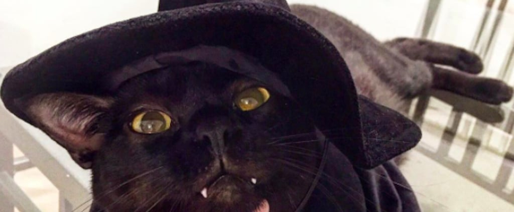 Vampire Cat From Instagram