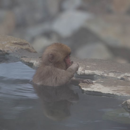 Snow Monkey Hot Springs in Yamanouchi, Japan