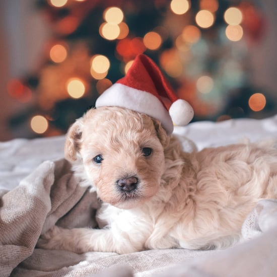 Cute Pictures of Christmas Puppies