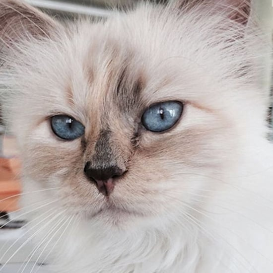 Cutest Pictures of Karl Lagerfeld's Cat Choupette