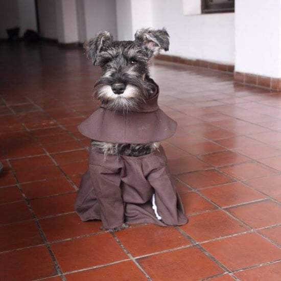 Stray Dog Joins a Monastery