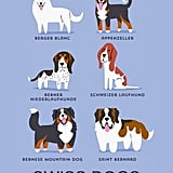 Swiss dogs
