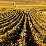 The vineyards in eastern France took on a golden hue after the harvest.