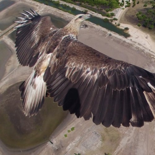 Best Drone Photography