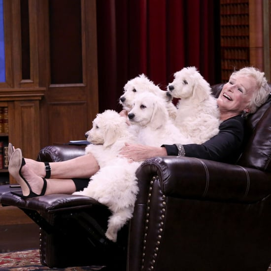 Glenn Close and Finn Wolfhard Play Pup Quiz on Fallon 2018