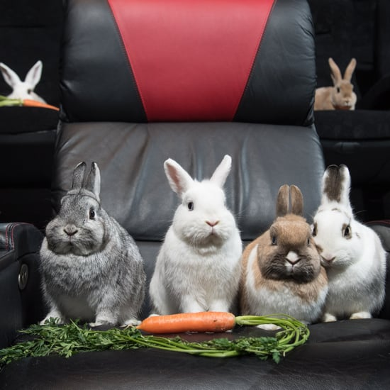Rabbits Watching Peter Rabbit Cinema