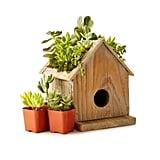 Birdhouse Succulent Planter