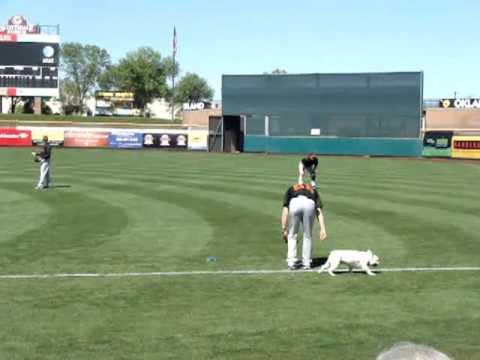 Video of Tim Lincecum's French Bulldog