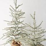 شجرة صغيرة