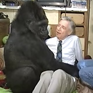 Koko the Gorilla Meeting Mr. Rogers Videos