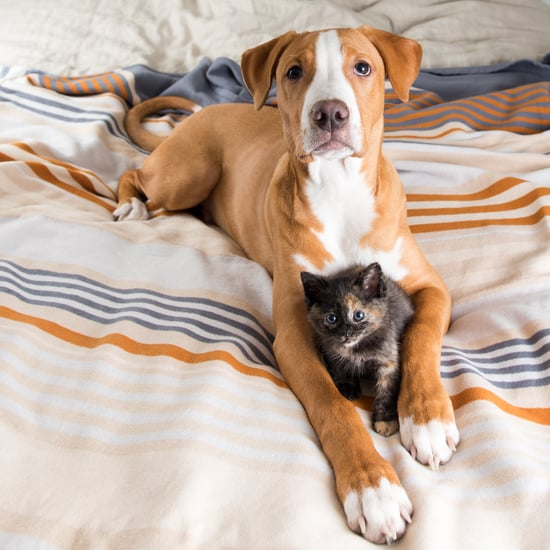 A Pet Owner's Guide to Keeping Your Home Clean and Comfy