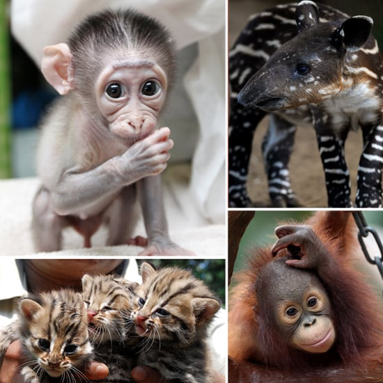 Photos Of Cute Baby Zoo Animals