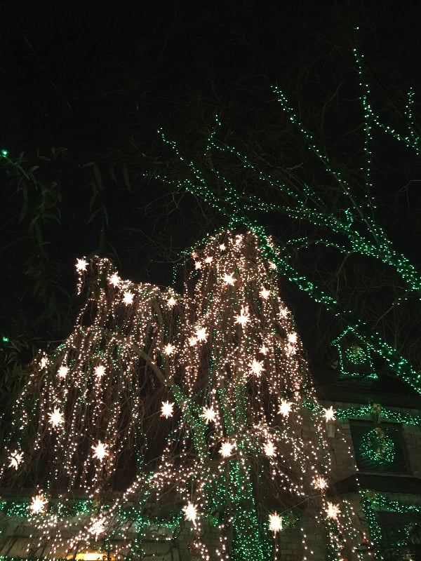 It's not just the houses that are lit up — the trees are, too!