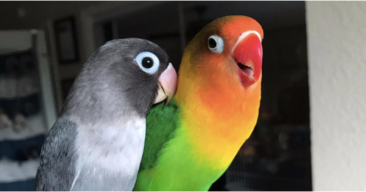 A & A Auto >> Kiwi and Goth Lovebirds | POPSUGAR Love & Sex