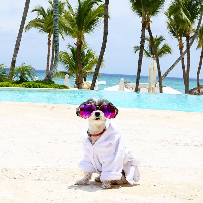 tinkerbelle the dog's punta cana vacation | popsugar pets