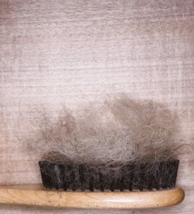 How Often Do You Clean Out Your Hairbrush?