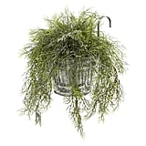 Tillandsia Moss
