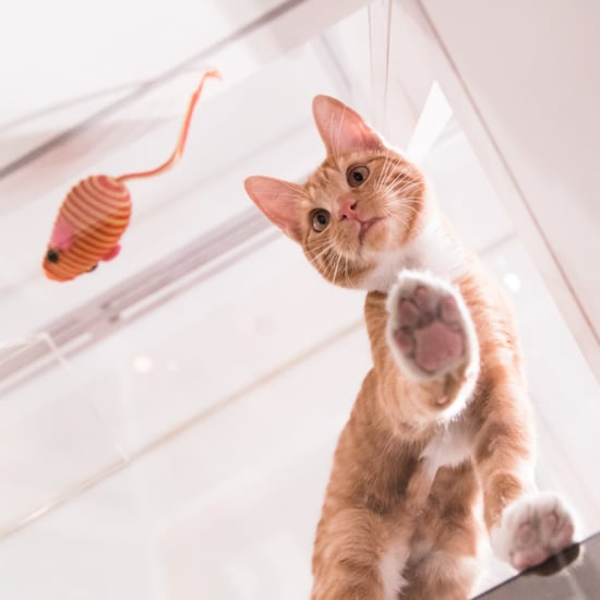 NYC's Cats On Glass Exhibit