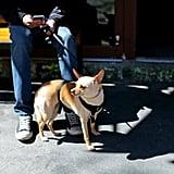 الذهاب مع كلب الحراسة في نزهة