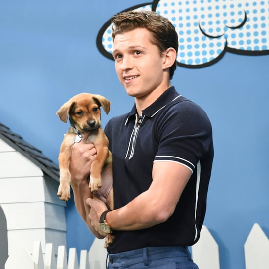 Tom Holland With Rescue Dogs on The Late Show Video