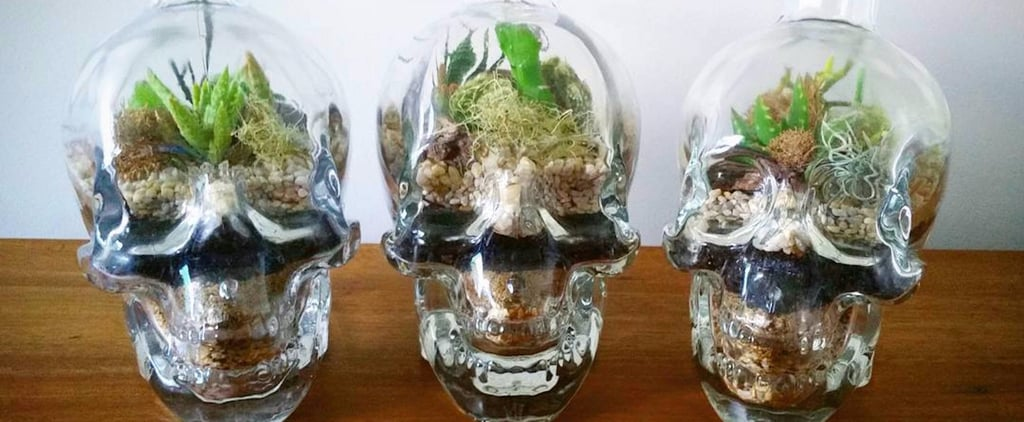 Skull Terrariums Are the Perfect DIY Project For Halloween-Loving Goth Queens