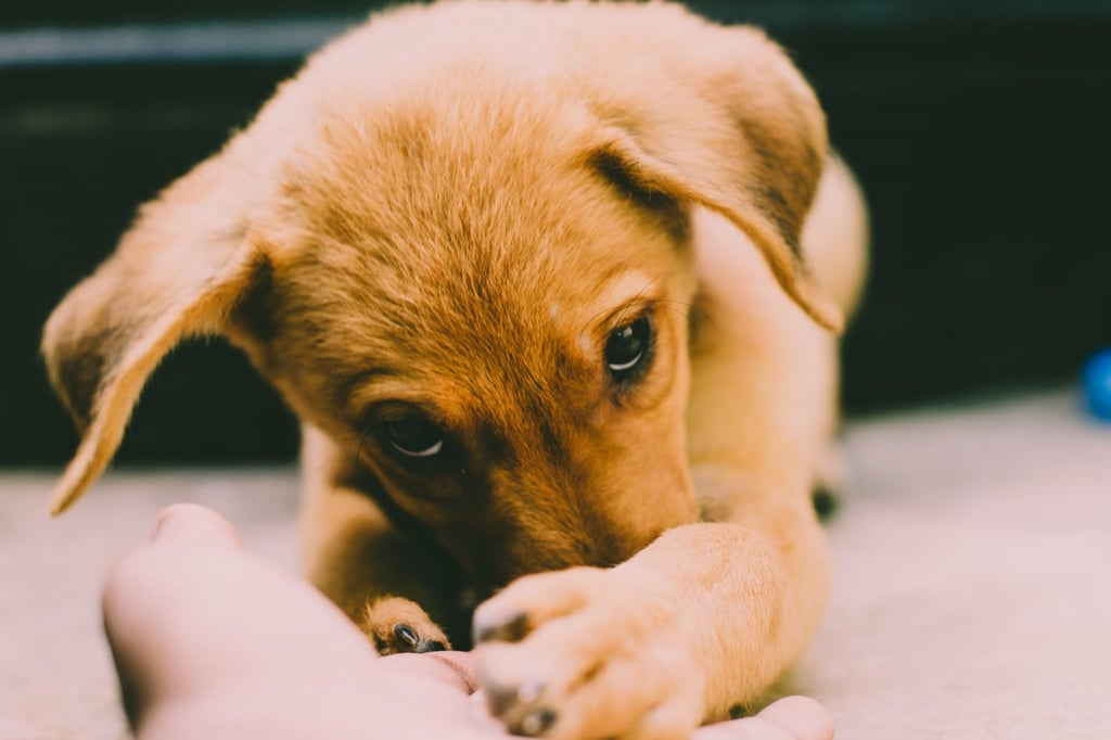 Your Puppy's Hygiene Isn't That Important