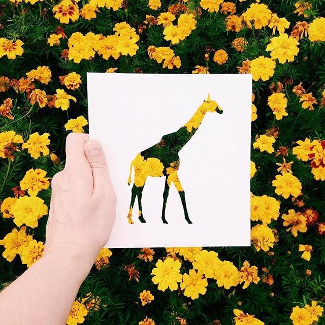 Cutout Animal Instagram