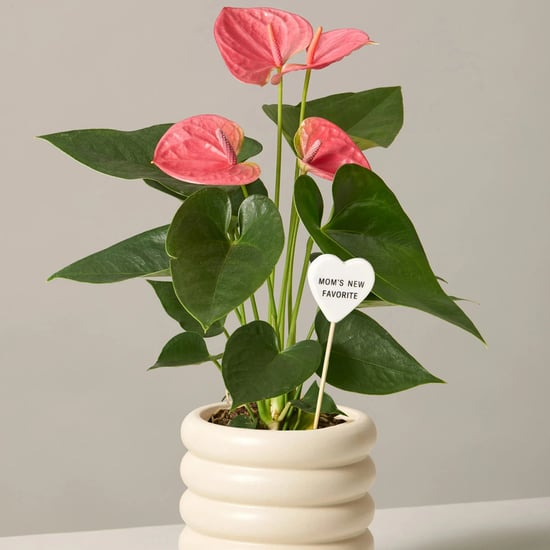 Best Flowers and Plants For Mother's Day Gifts