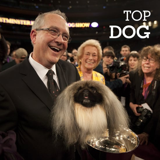 Top Dogs: Breeds With a Winning Tradition at Westminster